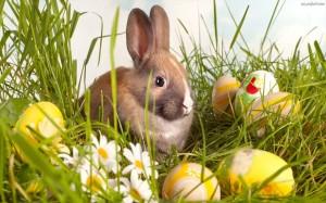 wielkanoc królik